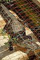 kaya scodelario crawl alligator event 18