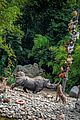 disneyland unveils new jungle cruise changes announces reopening date 06