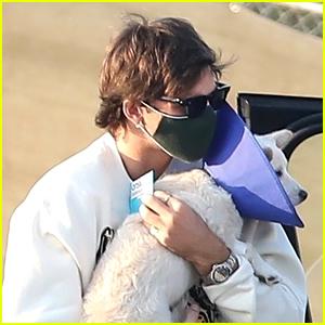 Jacob Elordi Picks Up Kaia Gerber's Pup From The Vet