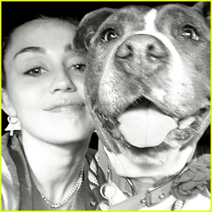 Miley Cyrus Introduces Fans To Her Newly Adopted Dog Angel!